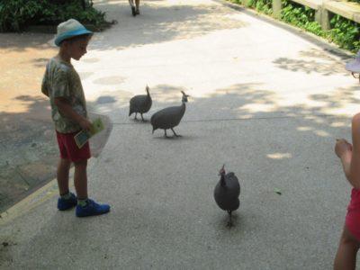 手が届く距離を歩いている鳥たち