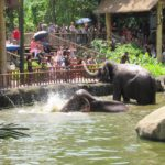 【2020年保存版】シンガライフ編集部がシンガポール動物園を徹底ガイド
