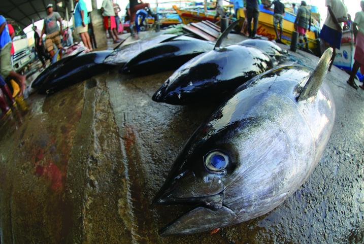 マグロの競り(魚市場)