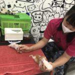 「小さな命を守りたい」その気持ちはシンガポールでも同じ。子猫を保護する「Kitten Sanctuary」を取材しました